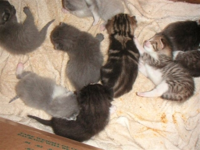 kitten-pile-2.JPG